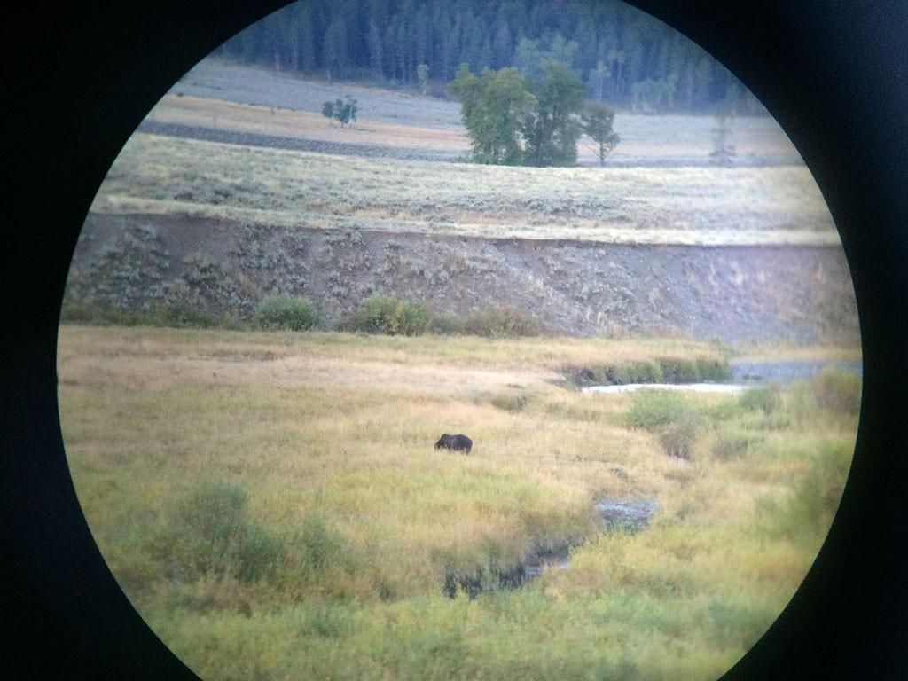 Grizzly durch das Fernrohr