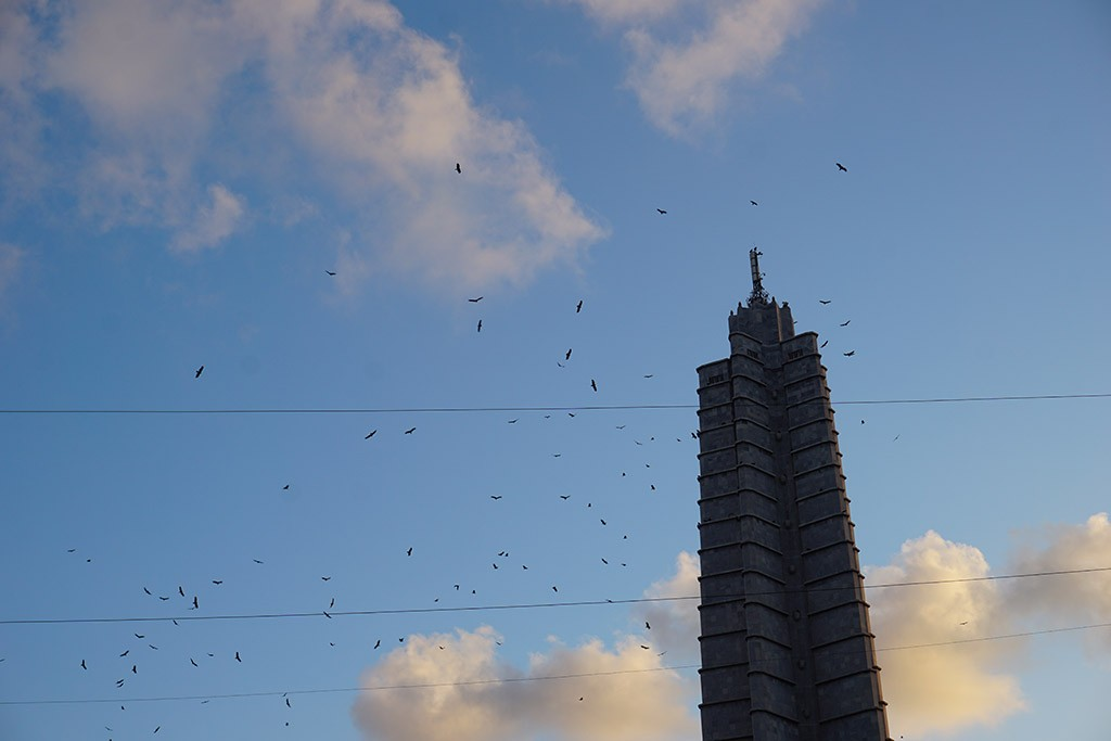 Hunderte Vögel fliegen um alles was in dieser Stadt hoch ist