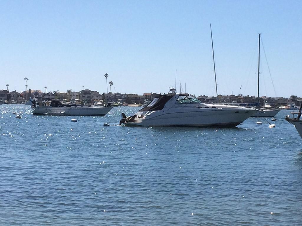 Süße sea lions, die sich auf einem der tausenden Booten ausruhen