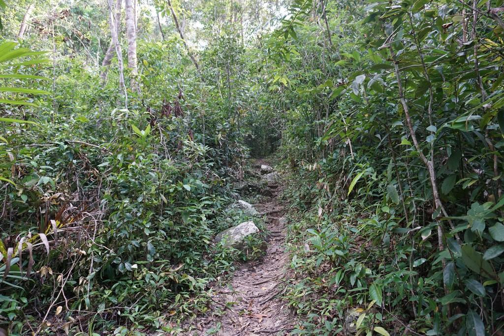 Der Weg zum Last Point führt durch den Dschungel