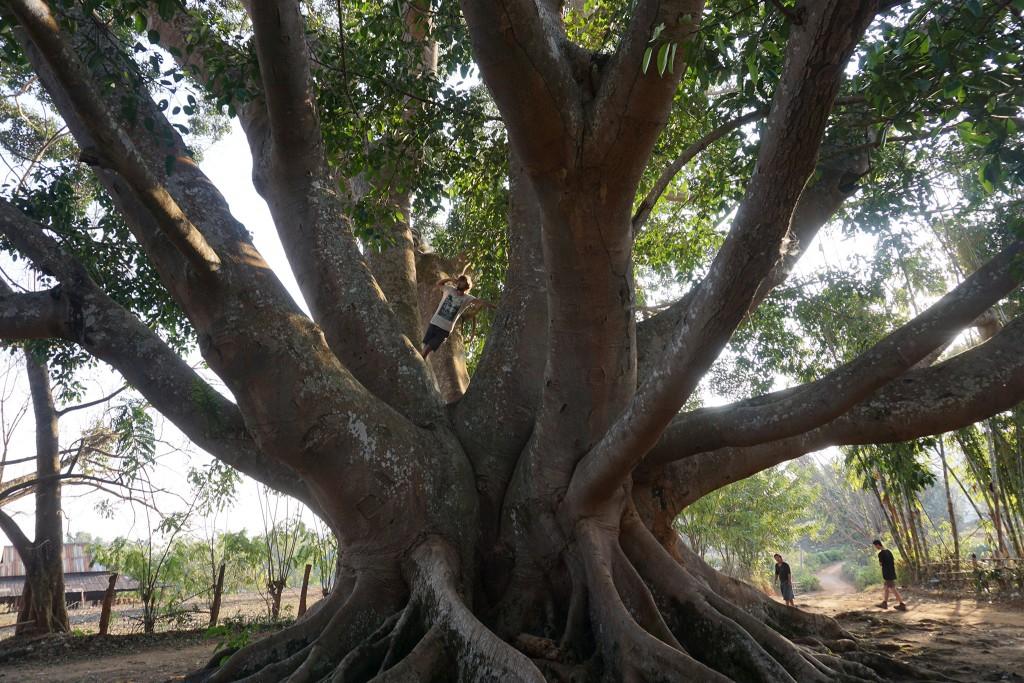 """Flo besteigt den """"amazing tree"""""""