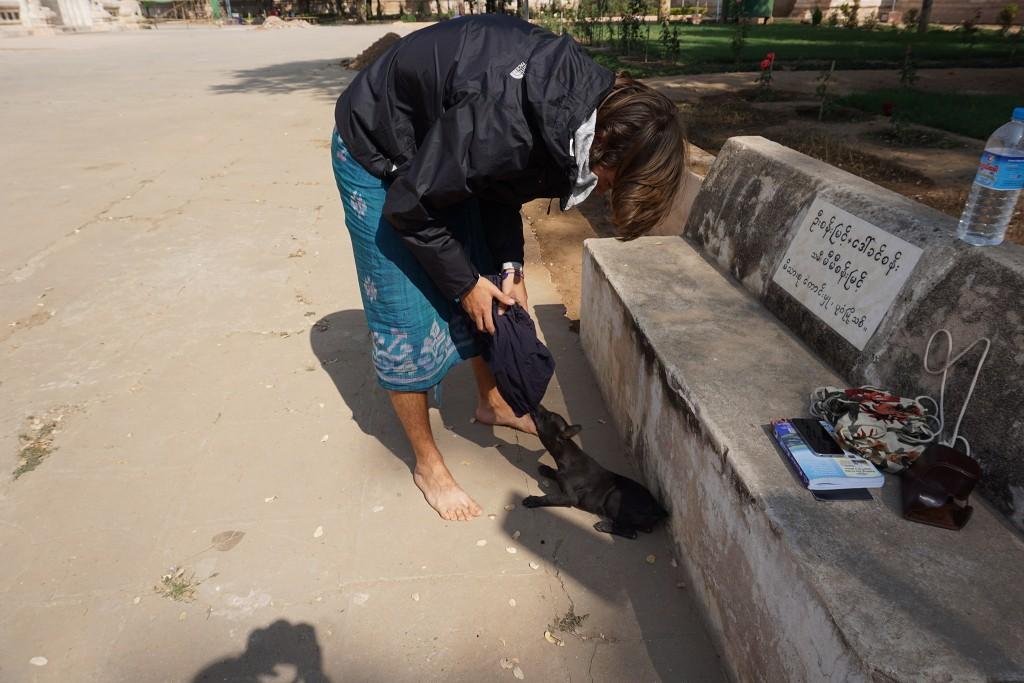 Hier hat ein Welpe es auf Flos Sarong abgesehen