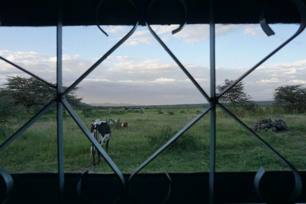 Blick aus der Terrassentür.